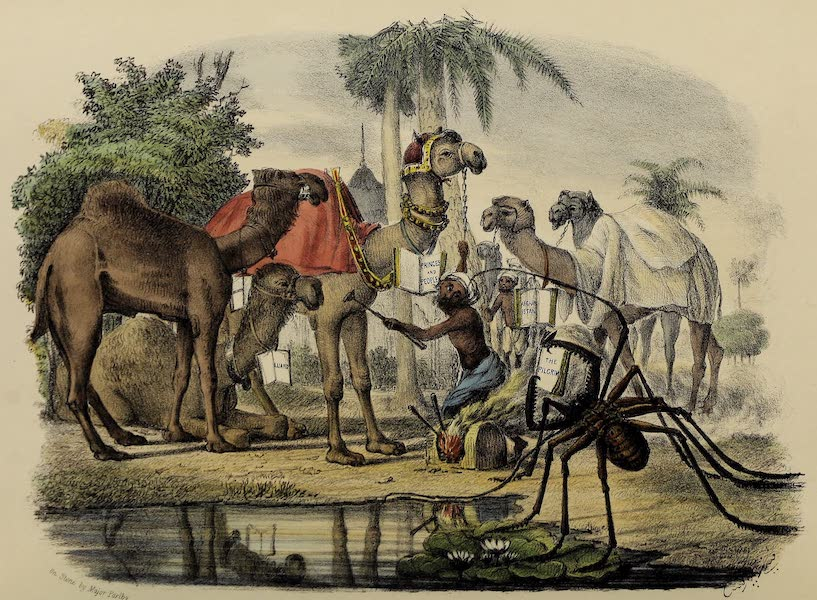 Wanderings of a Pilgrim, in Search of the Picturesque Vol. 1 - The Camels were being branded for public Service and the Spider came to be marked also (1850)