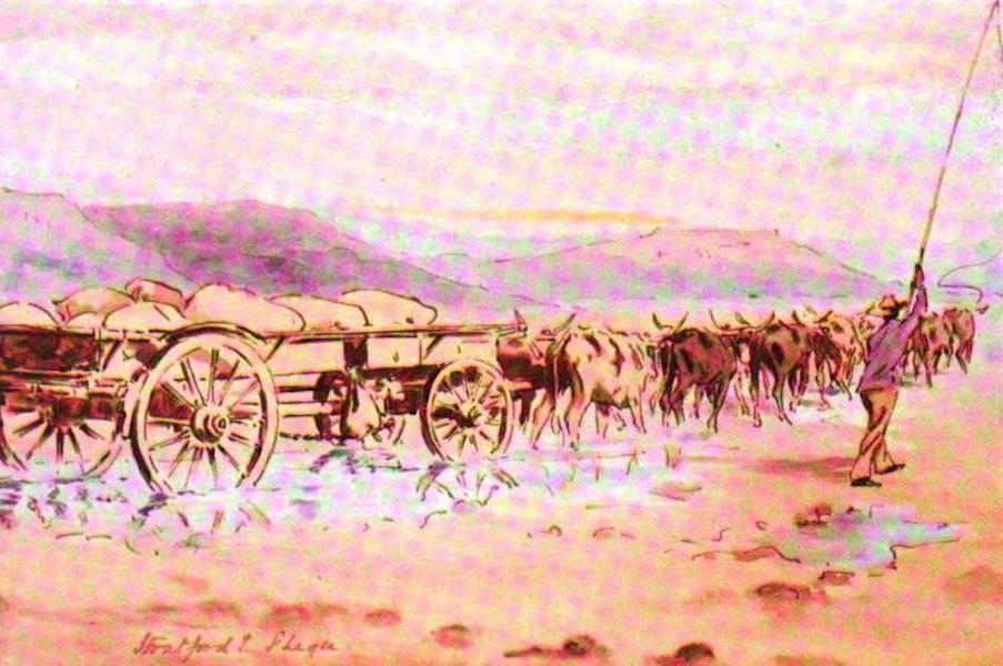 War Sketches in Colour - The Ox-waggon (1903)