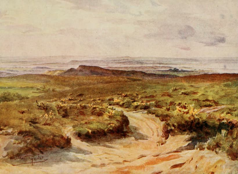 Wessex Painted and Described - Studland Heath : Poole Harbour in the distance (1906)