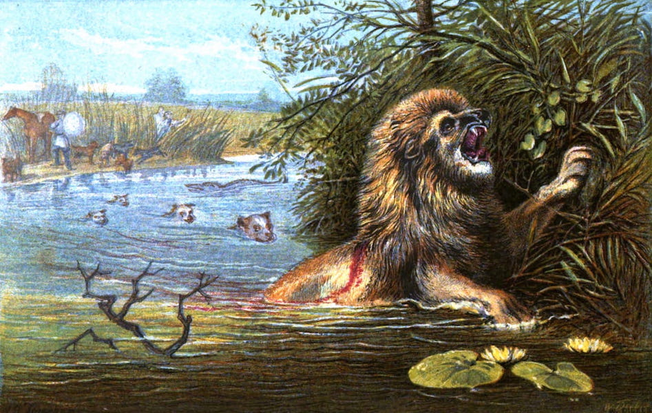 Wild Sports of the World - The Lion - Assailed by Death in Three Shapes (1862)