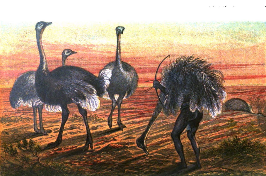 Wild Sports of the World - The Ostrich - Sailing Under False Colours (1862)