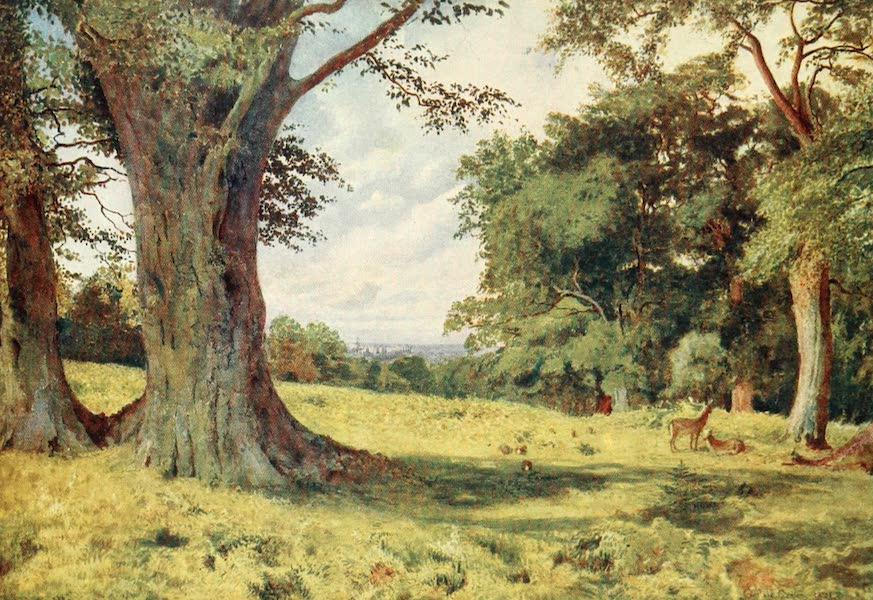 Windsor Painted and Described - A Glade in Windsor Great Park (1908)