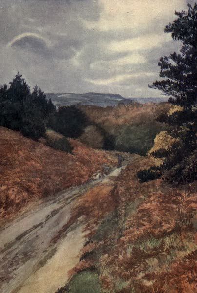 Yorkshire Coast and Moorland Scenes Painted and Described - Hutton Woods, near Guisborough (1904)