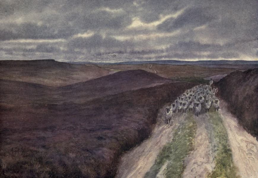 Yorkshire Coast and Moorland Scenes Painted and Described - A Wide Expanse of Heather seen from Great Ayton Moor (1904)