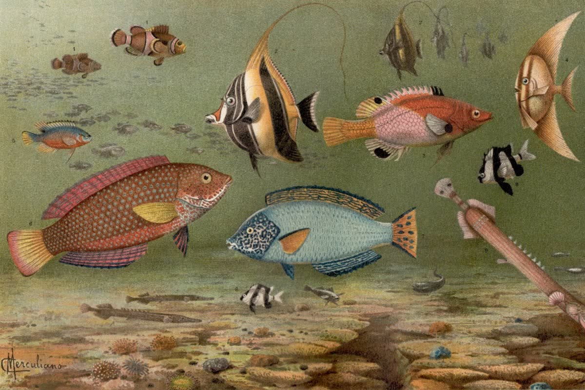 History Archive - Fish Collection