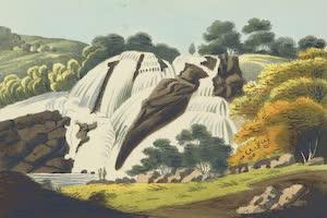 Collections - Nilgiri Mountains
