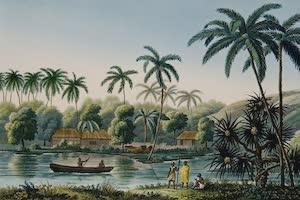 Collections - Tahiti